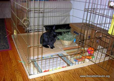 Sweet Home For Bunny X Pens And Other Housing Options